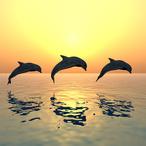 Square delfine drei