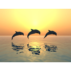 Thumbnail delfine drei
