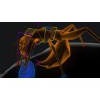 Thumbnail animating creatures maya insects 3523 v1