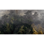 Thumbnail building realistic aerial forest scene 3ds max 2221 v1