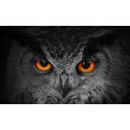 Thumbnail leergang visieontwikkeling in organisaties 2350x1795
